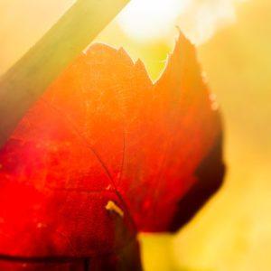 Herbstklein